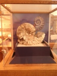 Clark Regional Park - Nature Center - Ammonite Fossil