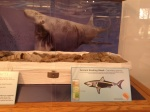 Clark Regional Park - Nature Center - Ancient Basking Shark